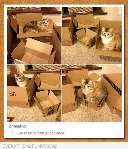 funny tumblr post one cat many boxes life is full of difficult decisions