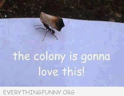 funny ant carrying joint roach the colony is going to love this