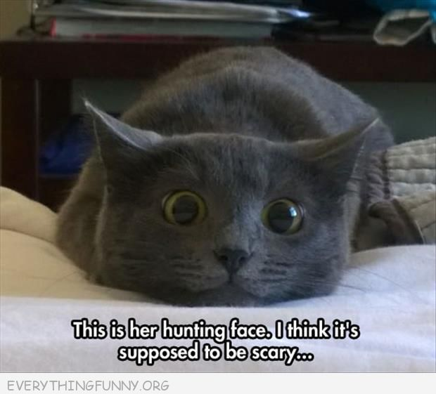 funny caption cat hunting face thinks its scary