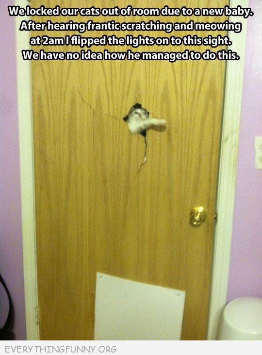 funny little cat creates huge hole in heavy door have no idea how they did it