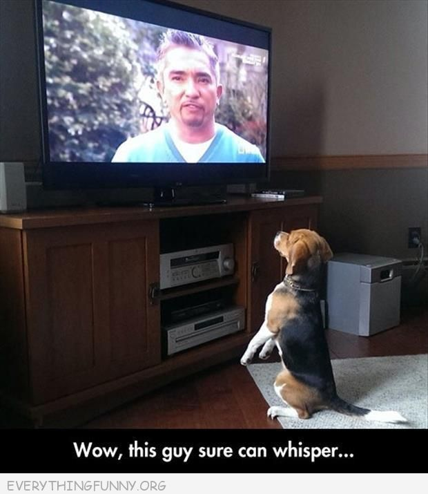 funny dog stands in front of tv wow this guy sure can whisper dog whisperer