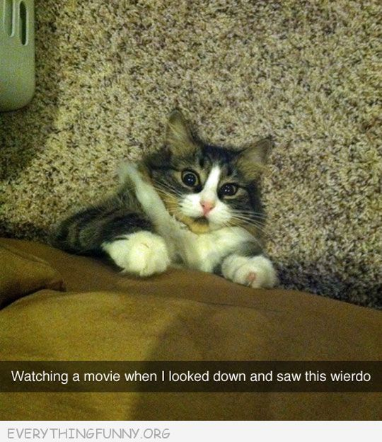 funny wataching movie looked down and saw this weirdo cat under couch peeking out