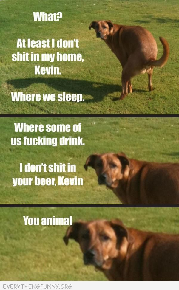 funny dog photos pics well at least i don't sh#t in my home Kevin where I drink