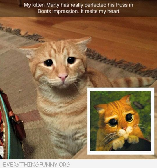 funny cat pictures cute cats looks just like puss in boots sad face
