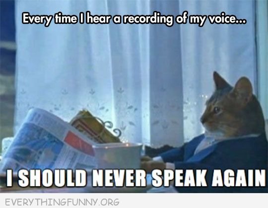 cat reading paper meme everytime i hear a recording of my voice i should never speak again