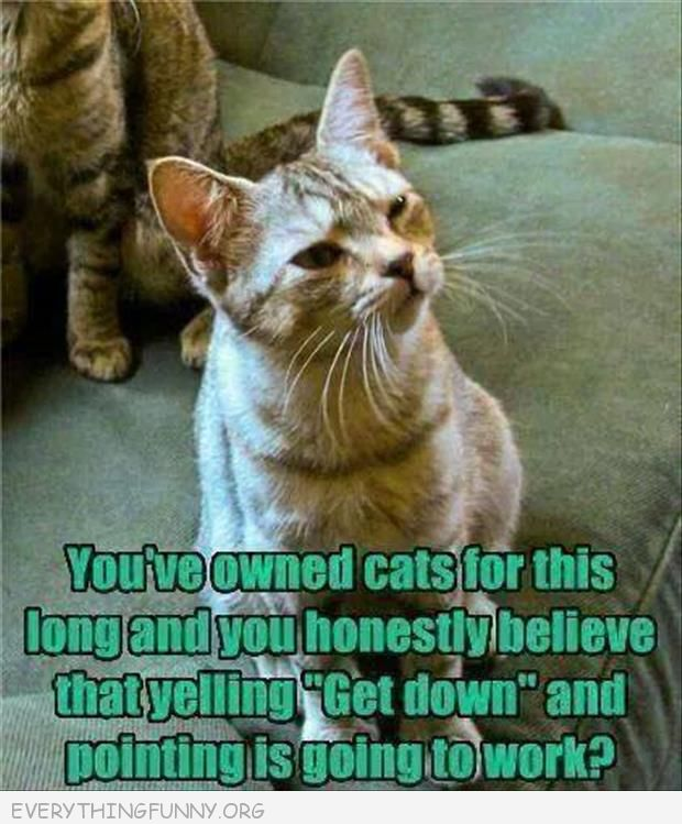 funny cat picture you've owned cats this long and honestly believe yelling get down and pointing is going to work