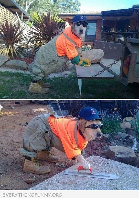 funy dog photos dog dressed as contractor construction worker