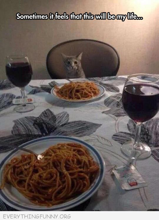funny cat picture sitting at table dinner for two sometimes it feels like this will be my life