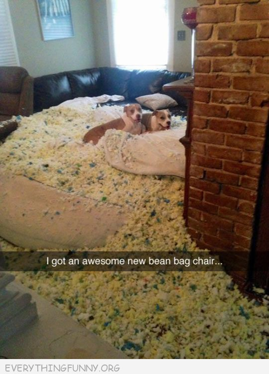 funny dog pictures dogs eat bean bag chair not even sorry