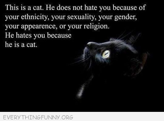 funny uote cat's don't hate you do to ethnicty, secuality they hate you because you are a cat