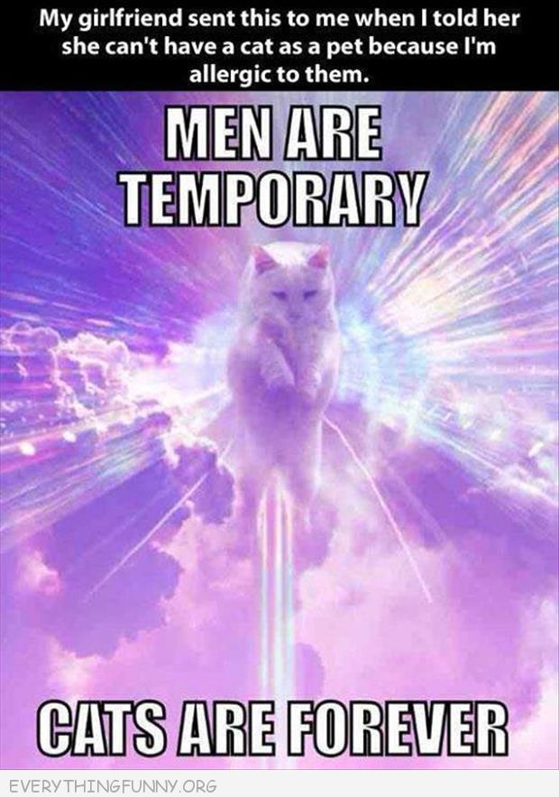 funny capton men are temporary cats  are forever