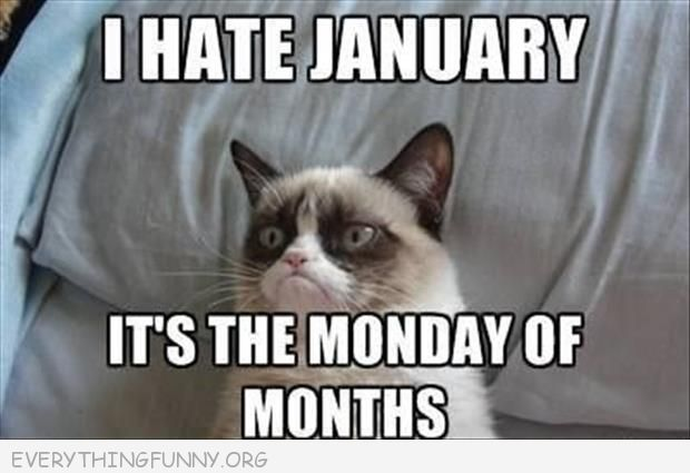 funny grumpy cat meme i hate january it's the monday of months