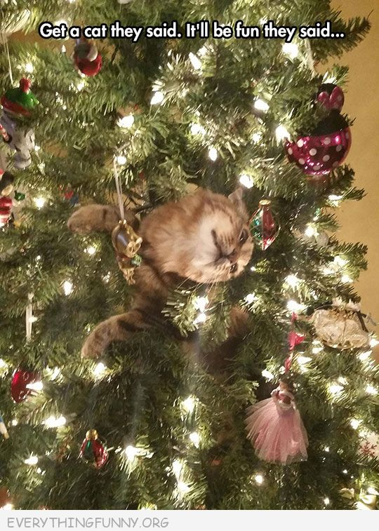 funny cat in christmas tree stuck climbing get a cat they said it will be fun they said