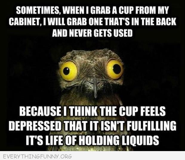 funny bird meme grab a cup from back of cabinet so it doesn't feel ignored