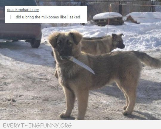 funny dog picture holding knife did you bring the milkbones like i asked