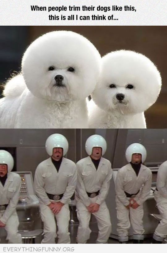 funnydog pictures when dogs hair is cut like helmet reminds me of spaceballs