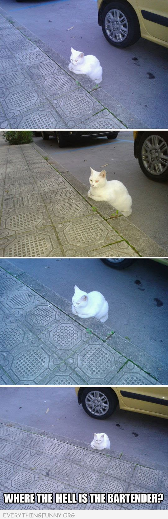 funny cat picture looks like he is sitting at bar curb