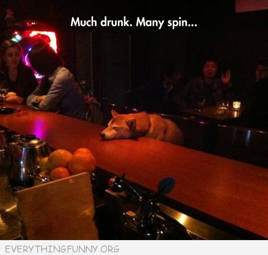 funny dog picture dog looks like passed out on bar much drink many spins