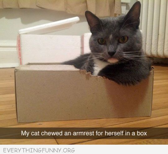 funny cat pictures my cat chewed an arm rest into her box
