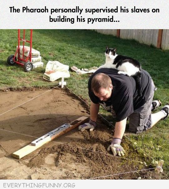 funny cat pictures cat sits on back of man working the pharaoh  personally supervises slaves