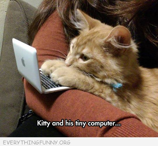 funny kitten cat with mini computer on the internet no one knows your a cat