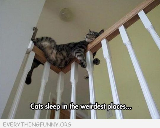 funny cat picture cat sleeping corner of banister