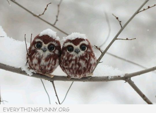 funny photo just two adorable owls