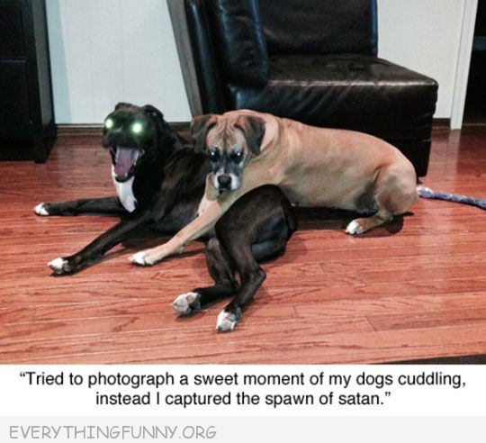 funny dog picture tried to capture a sweet picture of dogs instead captured the spawn of satan