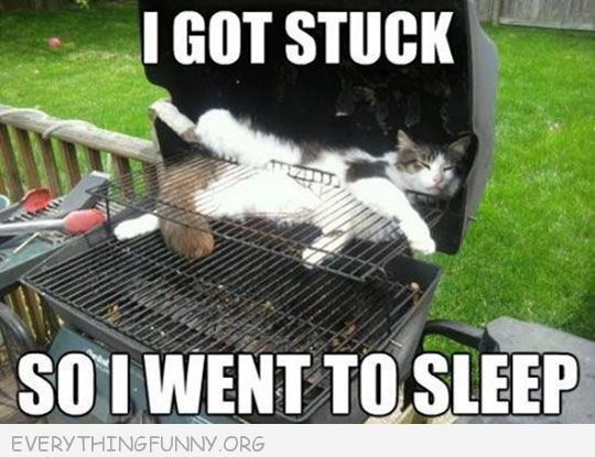 funny cat pictures i got stuck so i went to sleep cat on bbq