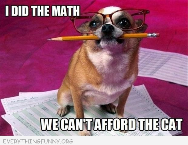funny dog caption i did the math we can't afford the cat