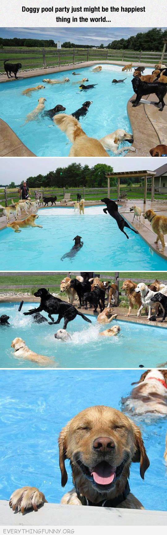 funny happy dogs at a swimming pool party