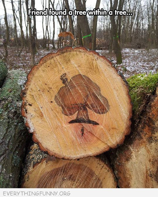 funny friend found tree within a tree shape inside cut tree stump