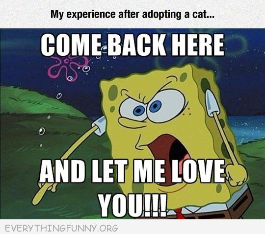 funy spongebob cartoon when adopting a cat come back here and let me love you