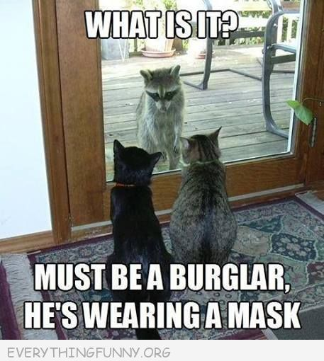 funny cats looking at racoon must be a burglar it has a mask
