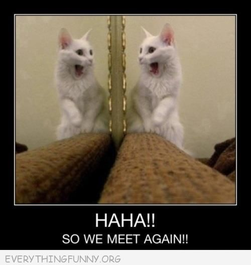 funny cat in mirror haha so we meet again