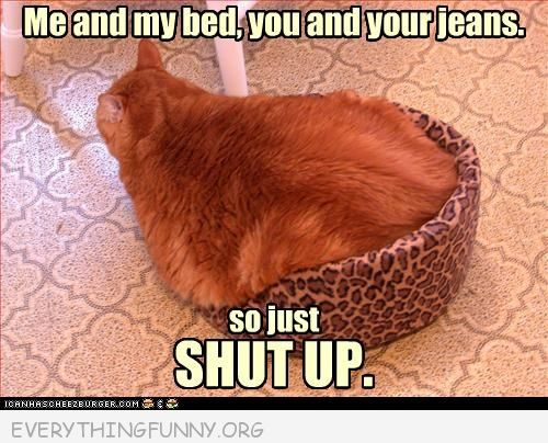 funny fat cat in small bed me and my bed you and your jeans