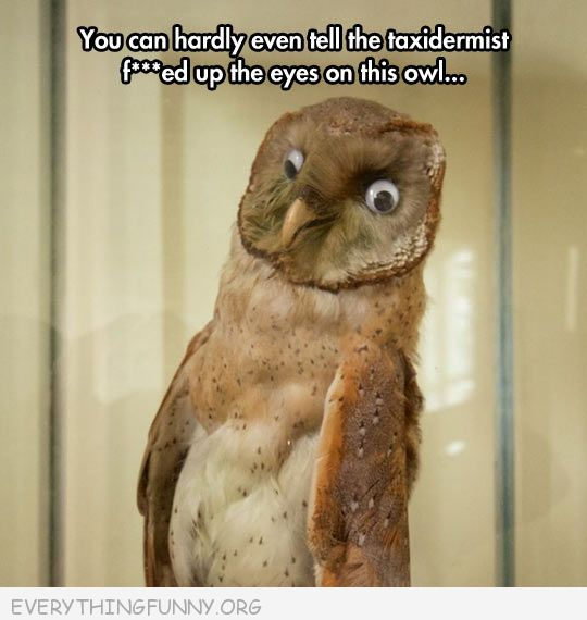 funny taxidermy owl gone wrong googly eyes