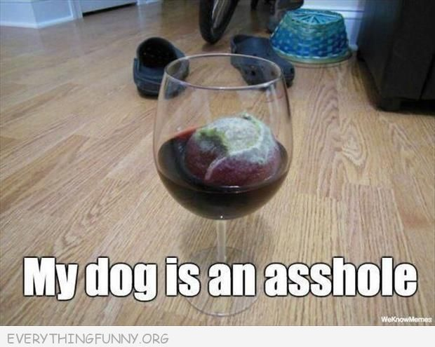 funny dog pictures dog drops ball into wine glass my dog is an asshole