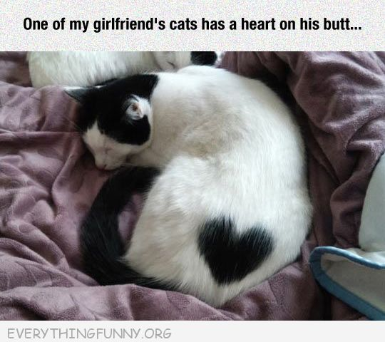 funny cat has heart on its butt