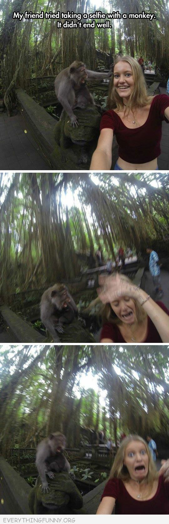 funny pictures selife with ape gorilla goes bad