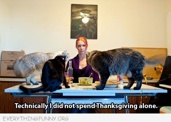 funny cat pictures at least didn't spend Thanksgiving alone women with 4 cats on table