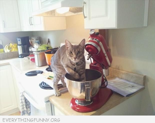 funny cat picture cat caught in mixer