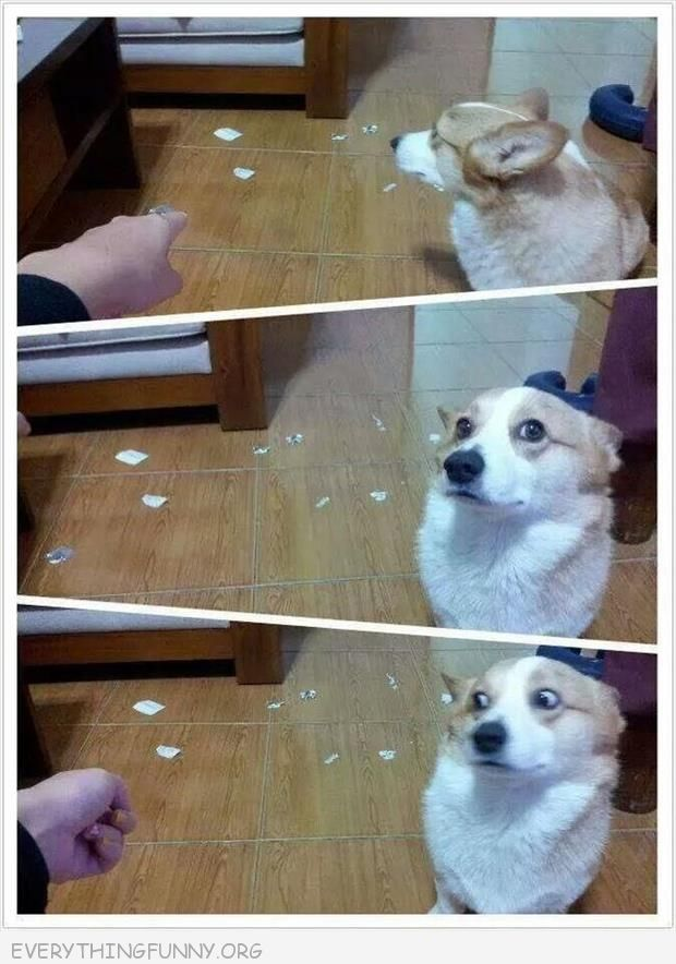funny dog picture guilty look rips up papers