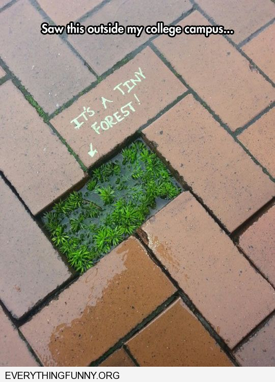 funny caption mini forest grows between bricks