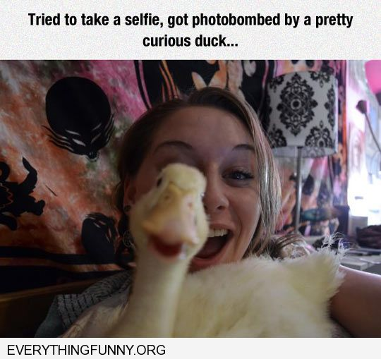 funny caption photobombed  by a duck