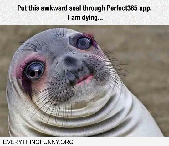 funny caption put this awkward seal through perfect365 app still laughing i'm dying