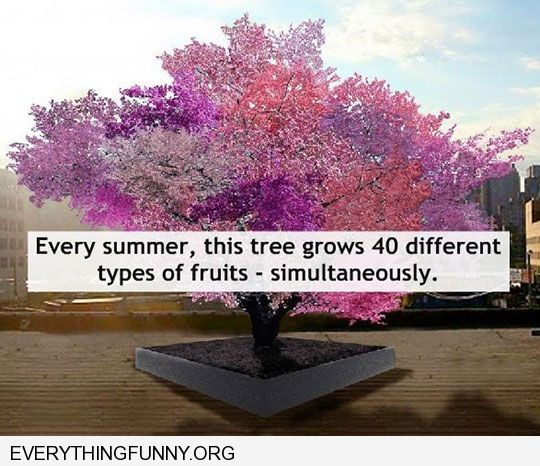 awesome tree grows 40 different fruits simultaneously