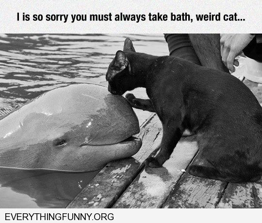 funny caption cat licks dolphin so sorry you have to take a bath weird cat
