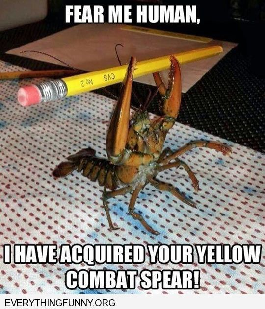 funny lobster holding pencil i have acquired your yellow combat spear