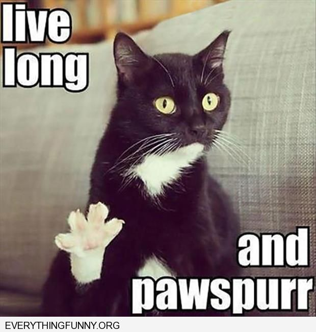 funny cat live long and pawspurr